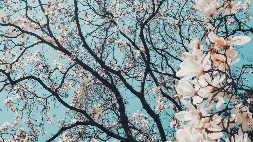 Frühlingserwachen mit feinen Tropfen aus der Natur